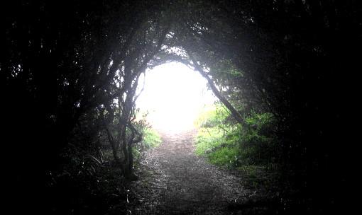 Step-into-the-light